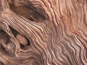 Foto von Sonja Wessel - Holzstruktur