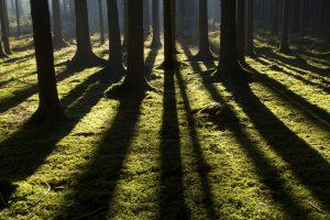 Foto von Sonja Wessel - Baumschatten