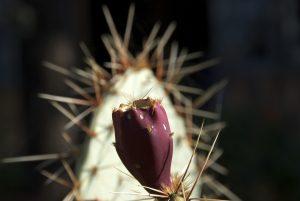 Foto von Sonja Wessel - Kaktus