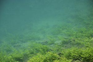Foto von Sonja Wessel - türkis-grünes Wasser